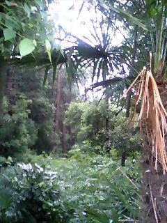 ジャングル!?